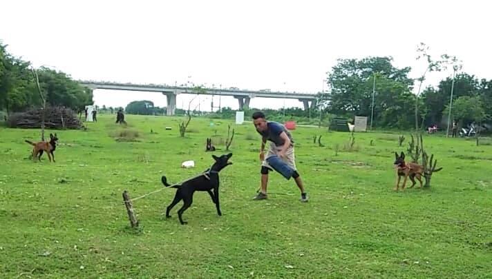 Trại chó Becgie Bỉ thuần chủng
