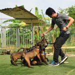Chó malinois huấn luyện, Cách huấn luyện chó Becgie Bỉ