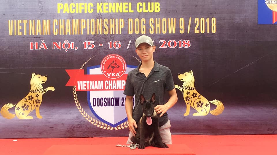 Hình ảnh chó becgie Bỉ tại cuộc thi dogshow