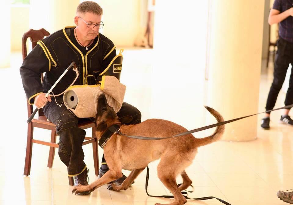 Quá trình đào tạo chó Becgie Bỉ thuần chủng của cảnh sát