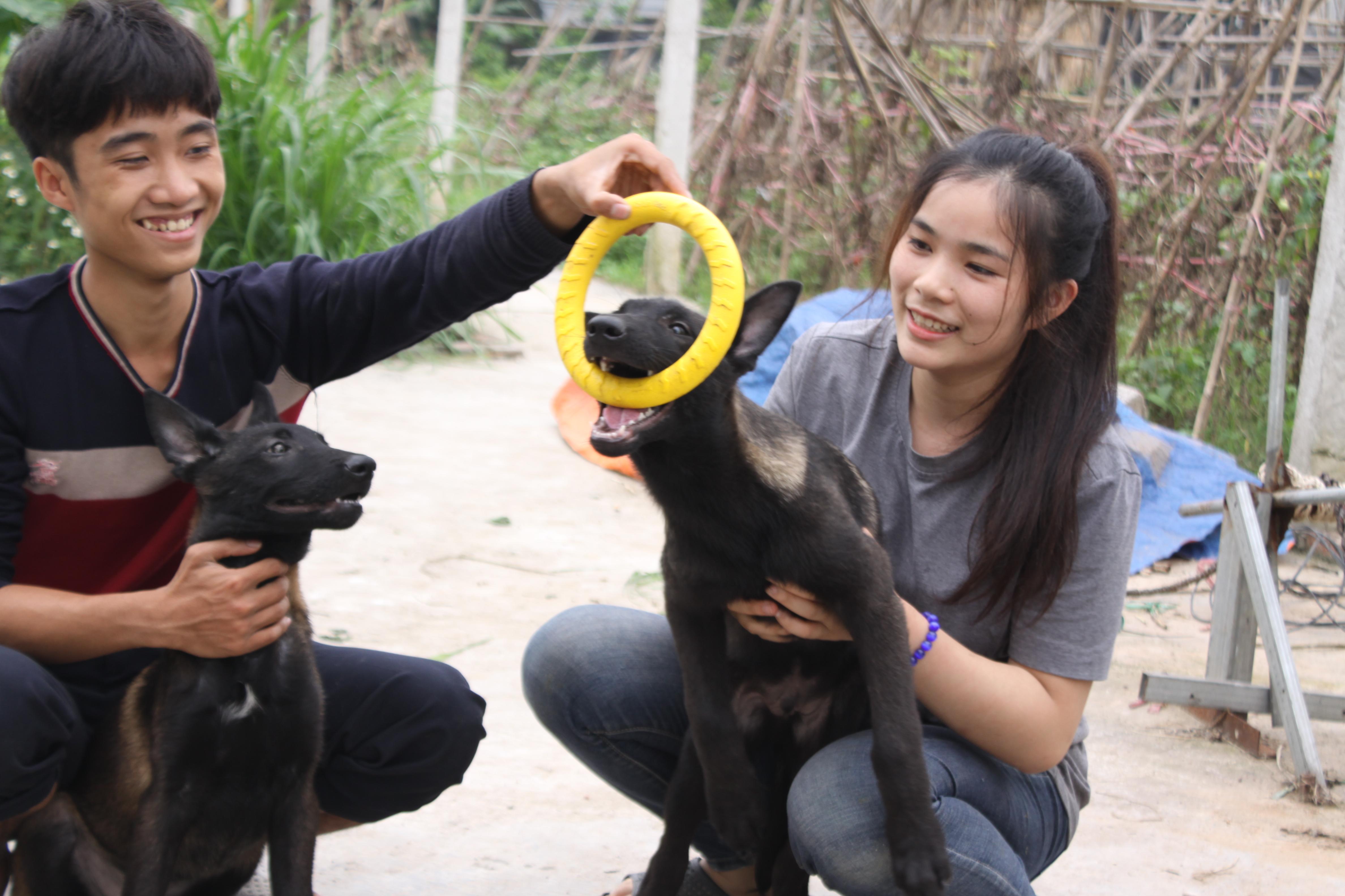 Bán chó becgie tại trại chó nghiệp vụ malinois Long Biên