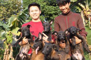Tuổi thọ chó becgie bỉ và cách cải thiện